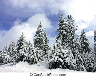 alberi pino, neve