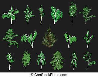 alberi., vettore, set