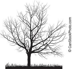 albero ciliegia, inverno