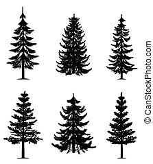 albero, collezione, pino