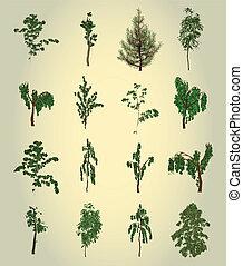 albero., design., vettore, set, elemento