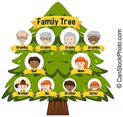 albero, famiglia, esposizione, diagramma, generazione, tre