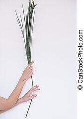 albero, foglia palma, ragazza, mani