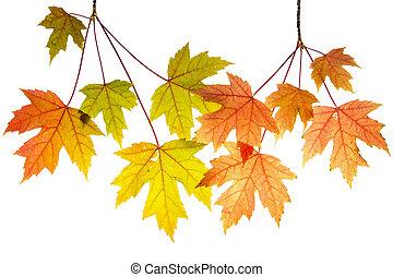 albero, foglie, rami, acero, appendere
