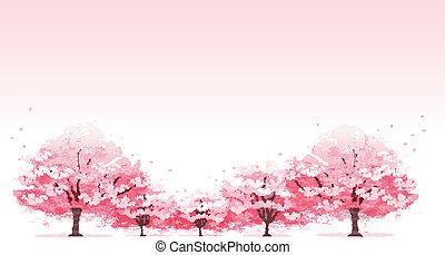 albero, fondo, fiore, ciliegia, linea
