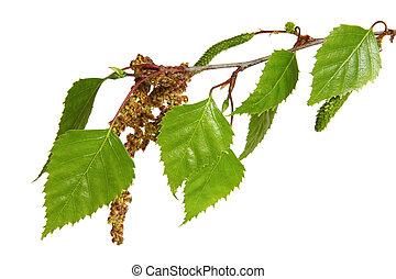 albero frusta, foglie