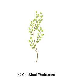 albero, giovane, verde, foliage., ramo, cartone animato