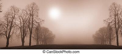 albero, inverno