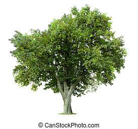 albero, isolato, mela