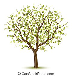 albero, leafage, verde