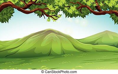 albero, moutains, scena
