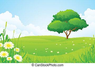 albero, paesaggio verde