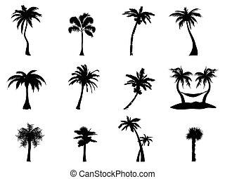 albero, palma, silhouette