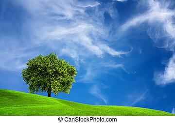 albero quercia, natura