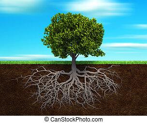 albero, rood