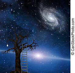 albero, saggezza