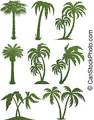 albero, silhouette, set, palma