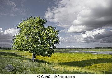 albero, singolo, palude, fondo, paesaggio rurale