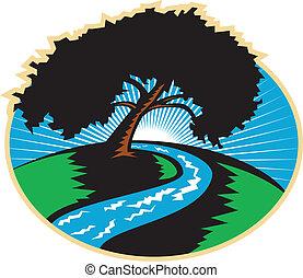 albero, sinuosità, pecan, retro, fiume, alba