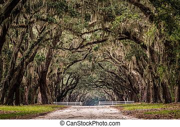 albero, strada, vivere, tunnel, sporcizia, attraverso, quercia