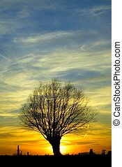 albero, tramonto