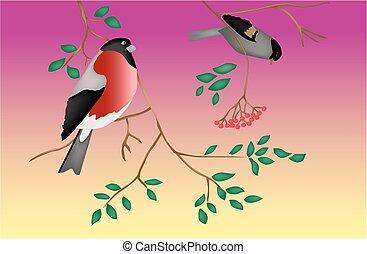 albero., twilight., vector., uccelli