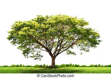 albero verde, paesaggio, natura