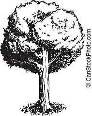 albero, vettore, quercia, illustrazione