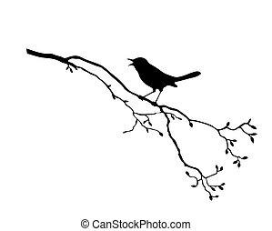 albero, vettore, silhouette, uccello, ramo