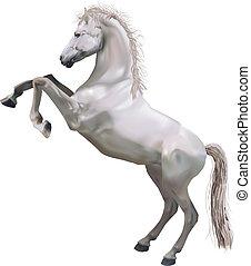 allevamento, illustrazione, cavallo