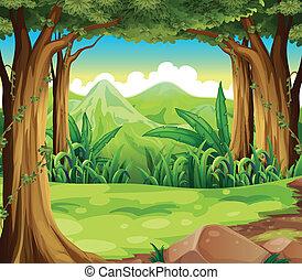alte montagne, foresta verde, attraverso