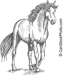 alzato, cavallo, standing, bianco, zoccolo
