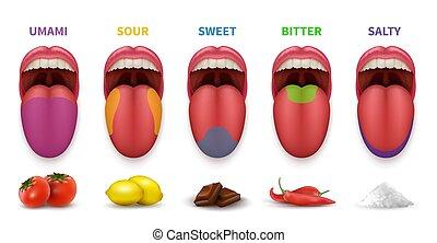 amaro, areas., bocca, vettore, umano, schiaffo, lingua, dolce, isolato, fondamentale, sfondo bianco, sapore, mappa, umami, salato, diagramma, aspro