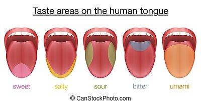 amaro, dolce, lingua, salato, gusto acido, umami