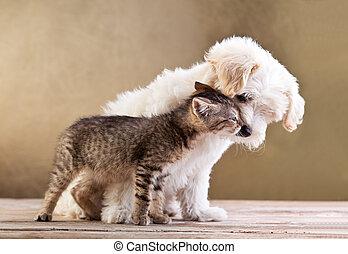 amici, -, cane, insieme, gatto