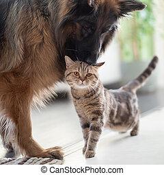 amicizia, insieme, gatto, cane, fra, pets., indoors.