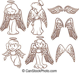 angeli