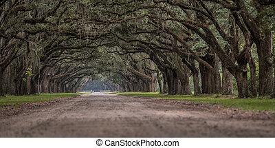 angolo, quercia, albero, vivere, basso, vista