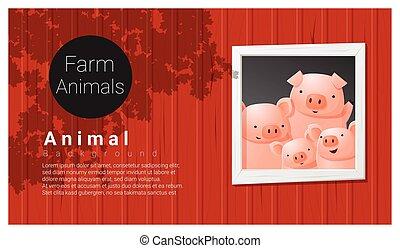 animale fattoria, fondo, maiale