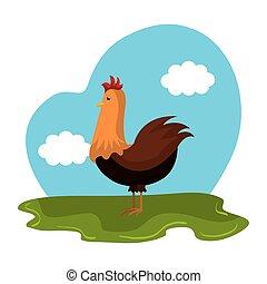 animale, fattoria, pollo, campo