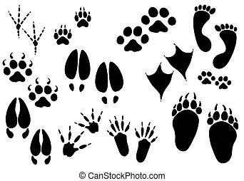 animale, vettore, piste, -