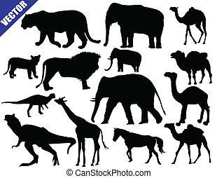animali, collezione, zoo
