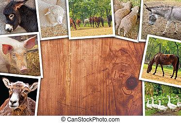 animali, vario, agricoltura, foto, collage