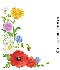 annuale, wildflowers
