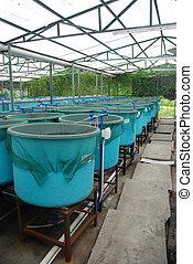 aquaculture, fattoria, agricoltura