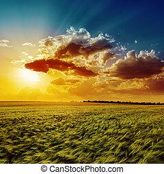 arancia, campo, agricoltura, verde, tramonto