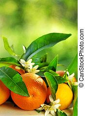 arancia, flowers., frutte