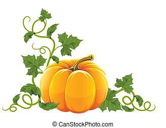 arancia, maturo, verdura, zucca