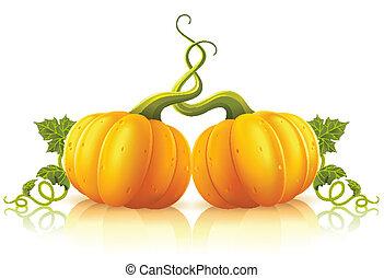 arancia parte, zucche, verde, due