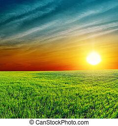 arancia, tramonto, sopra, campo verde